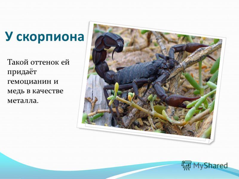 У скорпиона Такой оттенок ей придаёт гемоцианин и медь в качестве металла.