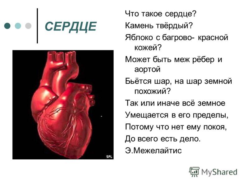СЕРДЦЕ Что такое сердце? Камень твёрдый? Яблоко с багрово- красной кожей? Может быть меж рёбер и аортой Бьётся шар, на шар земной похожий? Так или иначе всё земное Умещается в его пределы, Потому что нет ему покоя, До всего есть дело. Э.Межелайтис