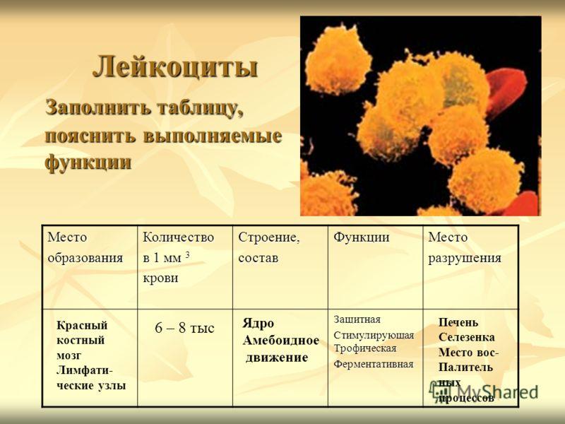 Лейкоциты Заполнить таблицу, пояснить выполняемые функции Лейкоциты Заполнить таблицу, пояснить выполняемые функции МестообразованияКоличество в 1 мм 3 кровиСтроение,составФункцииМесторазрушения Защитная Стимулирующая Трофическая Ферментативная 6 – 8