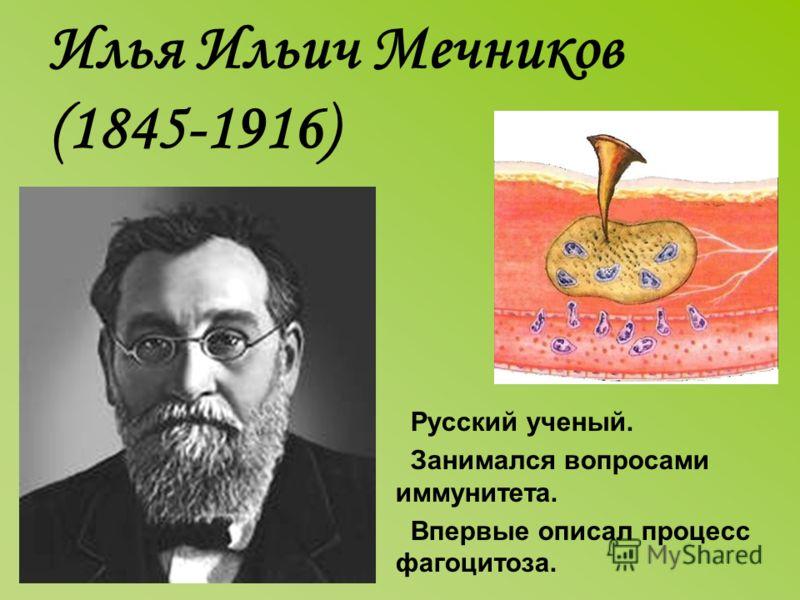 Илья Ильич Мечников (1845-1916) Русский ученый. Занимался вопросами иммунитета. Впервые описал процесс фагоцитоза.