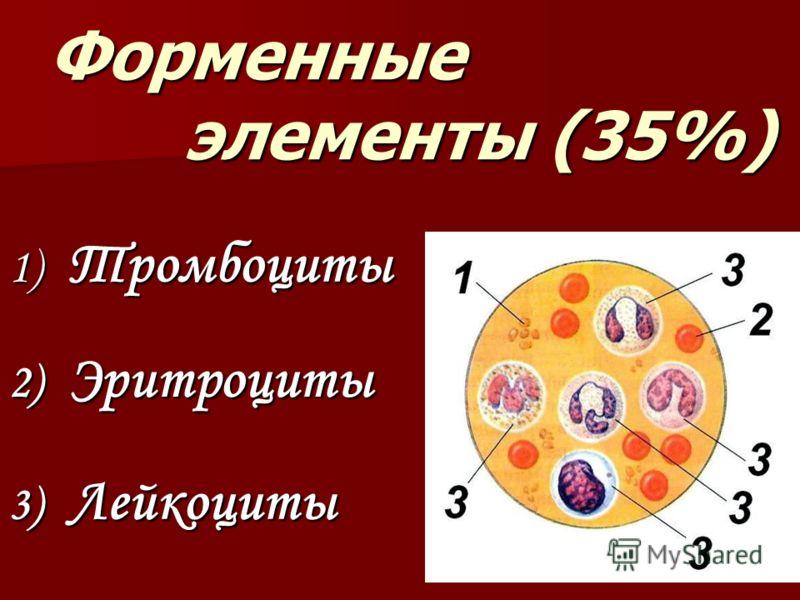 Форменные элементы (35%) 1) Тромбоциты 3) Лейкоциты 2) Эритроциты