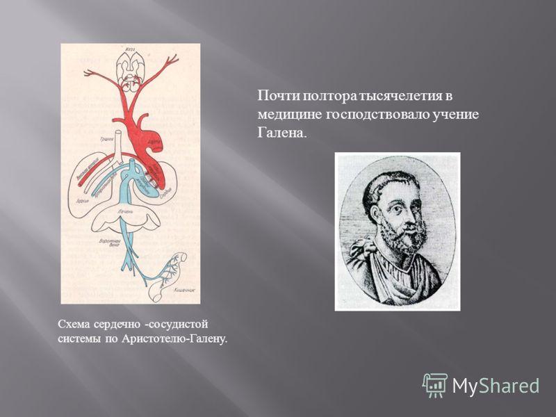 Схема сердечно -сосудистой системы по Аристотелю-Галену. Почти полтора тысячелетия в медицине господствовало учение Галена.