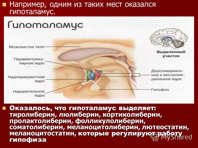Например, одним из таких мест оказался гипоталамус. Оказалось, что гипоталамус выделяет: тиролиберин, люлиберин, кортиколиберин, пролактолиберин, фолликулолиберин, соматолиберин, меланоцитолиберин, лютеостатин, меланоцитостатин, которые регулируют ра