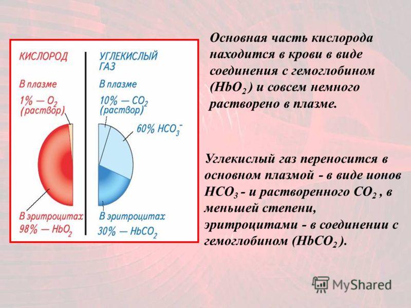 Основная часть кислорода находится в крови в виде соединения с гемоглобином (HbO 2 ) и совсем немного растворено в плазме. Углекислый газ переносится в основном плазмой - в виде ионов НСО 3 - и растворенного СО 2, в меньшей степени, эритроцитами - в