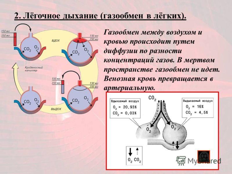 2. Лёгочное дыхание (газообмен в лёгких). Газообмен между воздухом и кровью происходит путем диффузии по разности концентраций газов. В мертвом пространстве газообмен не идет. Венозная кровь превращается в артериальную.