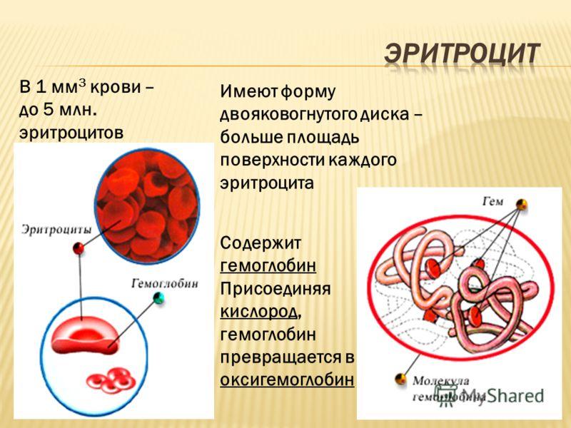 Содержит гемоглобин Присоединяя кислород, гемоглобин превращается в оксигемоглобин В 1 мм 3 крови – до 5 млн. эритроцитов Имеют форму двояковогнутого диска – больше площадь поверхности каждого эритроцита