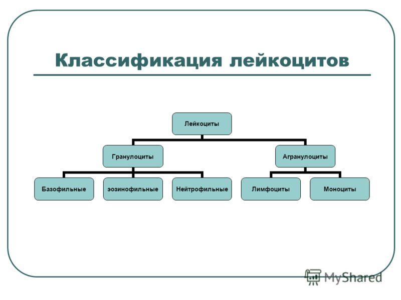 Классификация лейкоцитов Лейкоциты Гранулоциты БазофильныеэозинофильныеНейтрофильные Агранулоциты ЛимфоцитыМоноциты