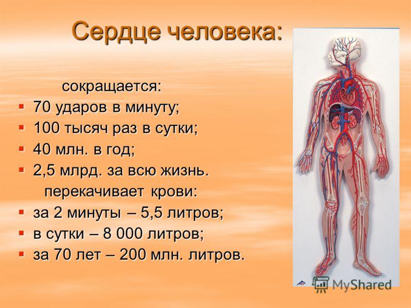 Сердце человека: сокращается: сокращается: 70 ударов в минуту; 70 ударов в минуту; 100 тысяч раз в сутки; 100 тысяч раз в сутки; 40 млн. в год; 40 млн. в год; 2,5 млрд. за всю жизнь. 2,5 млрд. за всю жизнь. перекачивает крови: перекачивает крови: за