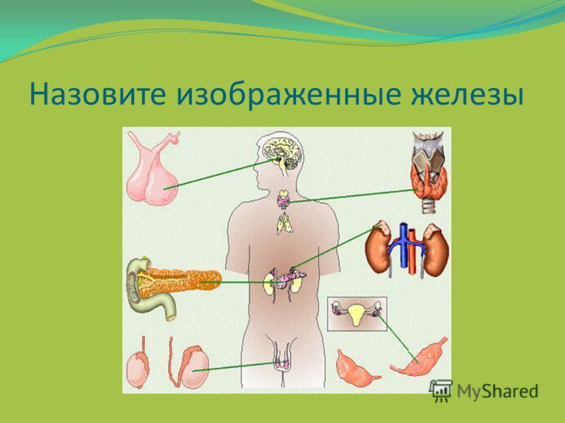 Эндокринные заболевания животных презентация