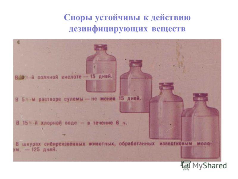 Споры устойчивы к действию дезинфицирующих веществ