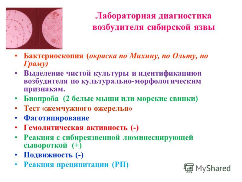 Лабораторная диагностика возбудителя сибирской язвы Бактериоскопия (окраска по Михину, по Ольту, по Граму) Выделение чистой культуры и идентификациюя возбудителя по культурально-морфологическим признакам. Биопроба (2 белые мыши или морские свинки) Те
