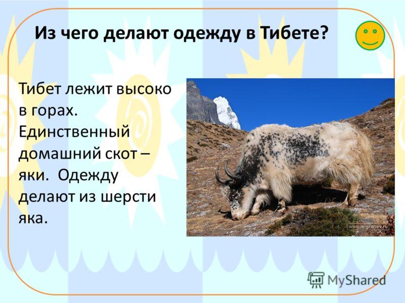 Из чего делают одежду в Тибете? Тибет лежит высоко в горах. Единственный домашний скот – яки. Одежду делают из шерсти яка.