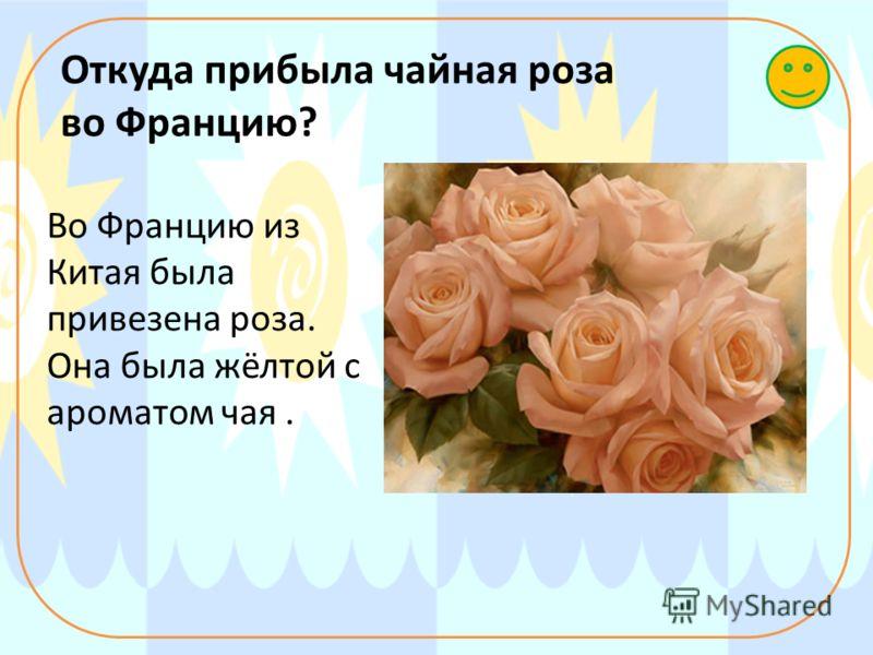 Откуда прибыла чайная роза во Францию? Во Францию из Китая была привезена роза. Она была жёлтой с ароматом чая.