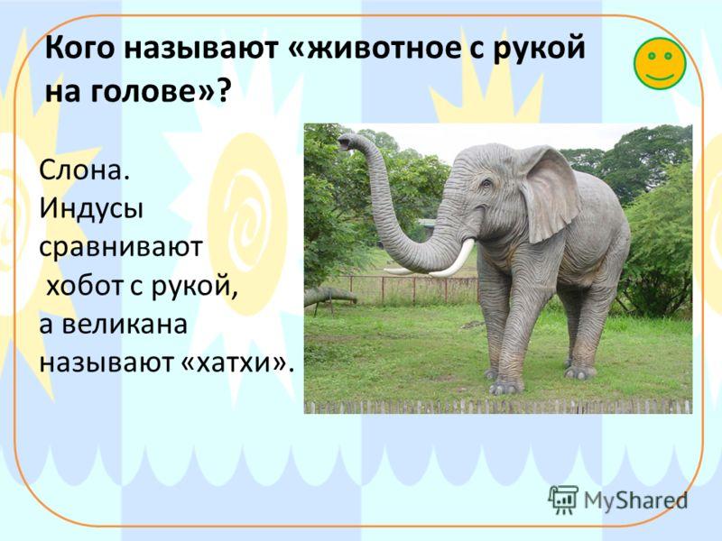 Кого называют «животное с рукой на голове»? Слона. Индусы сравнивают хобот с рукой, а великана называют «хатхи».