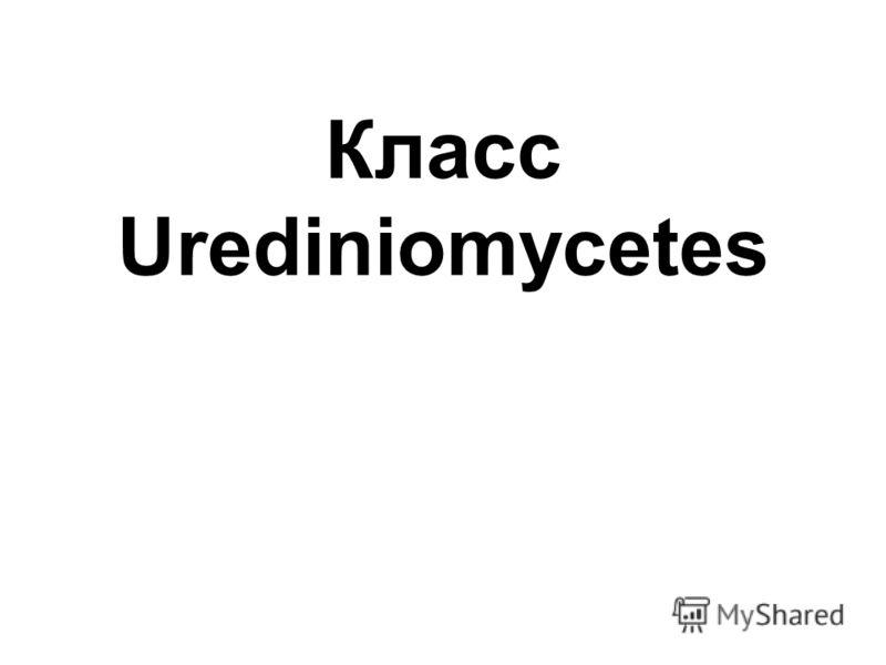Класс Urediniomycetes