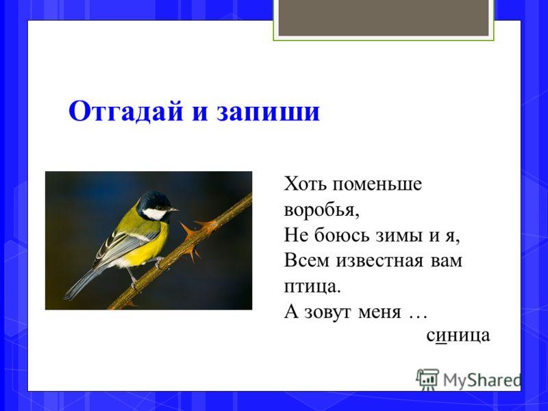Отгадай и запиши Хоть поменьше воробья, Не боюсь зимы и я, Всем известная вам птица. А зовут меня … синица