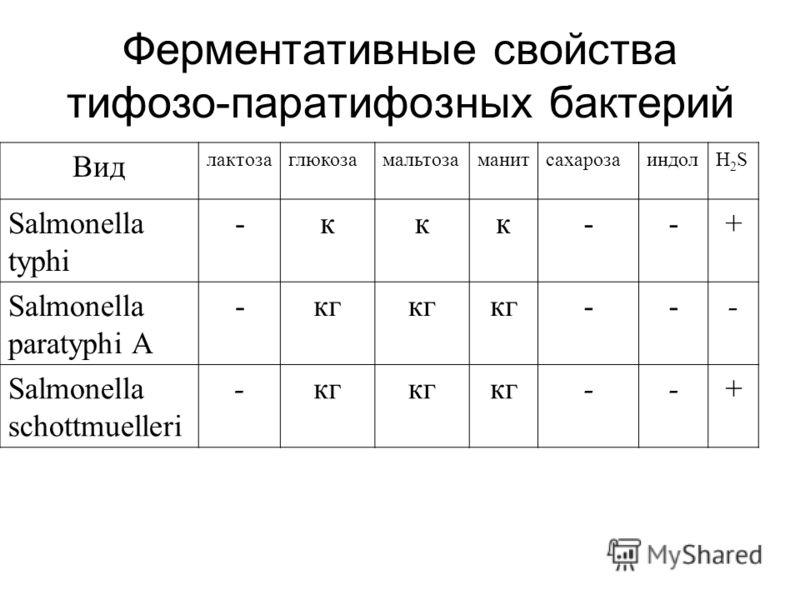 Ферментативные свойства тифозо-паратифозных бактерий Вид лактозаглюкозамальтозаманитсахарозаиндолH2SH2S Salmonella typhi -ккк--+ Salmonella paratyphi A -кг --- Salmonella schottmuelleri -кг --+