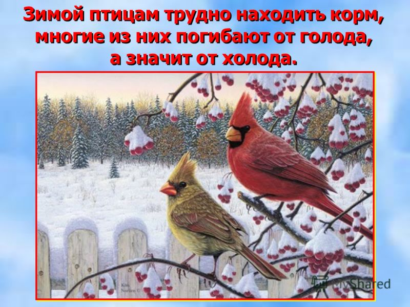 Зимой птицам трудно находить корм, многие из них погибают от голода, а значит от холода. Зимой птицам трудно находить корм, многие из них погибают от голода, а значит от холода.