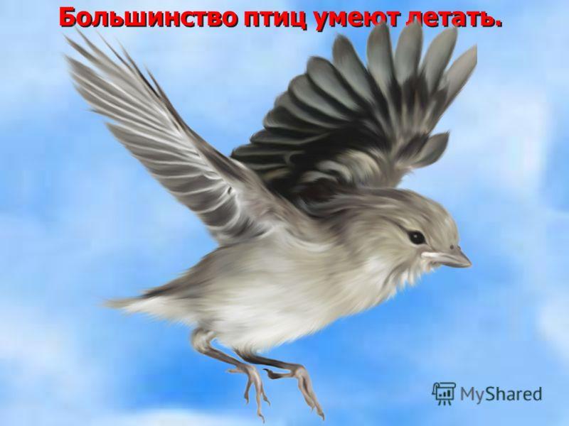 Большинство птиц умеют летать.