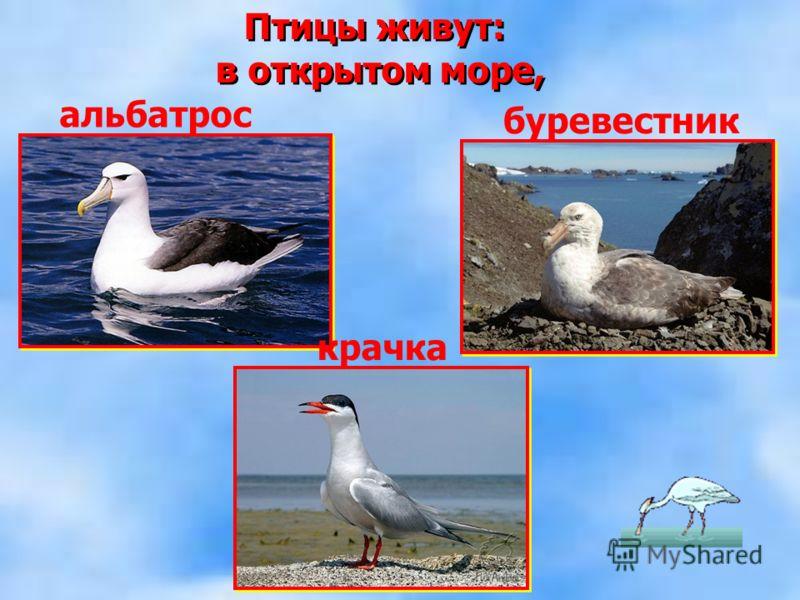 Птицы живут: в открытом море, Птицы живут: в открытом море, альбатрос буревестник крачка