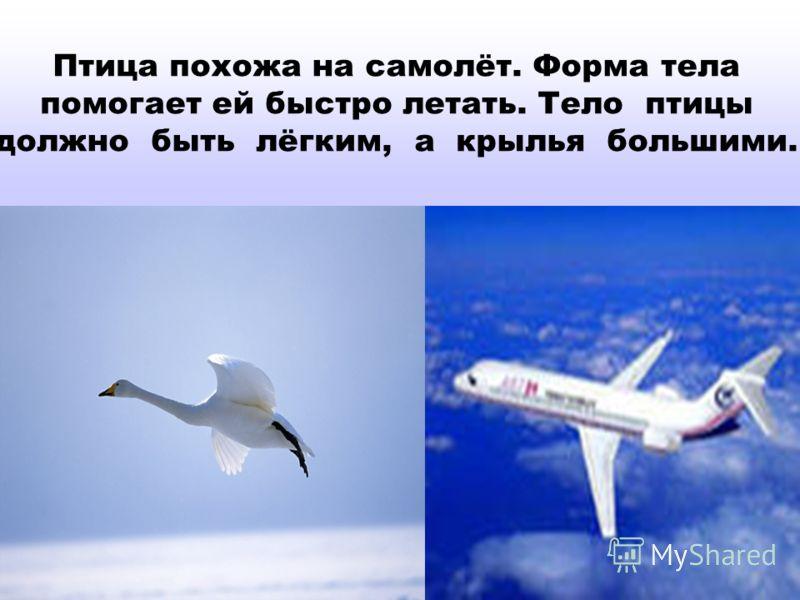 Птица похожа на самолёт. Форма тела помогает ей быстро летать. Тело птицы должно быть лёгким, а крылья большими.