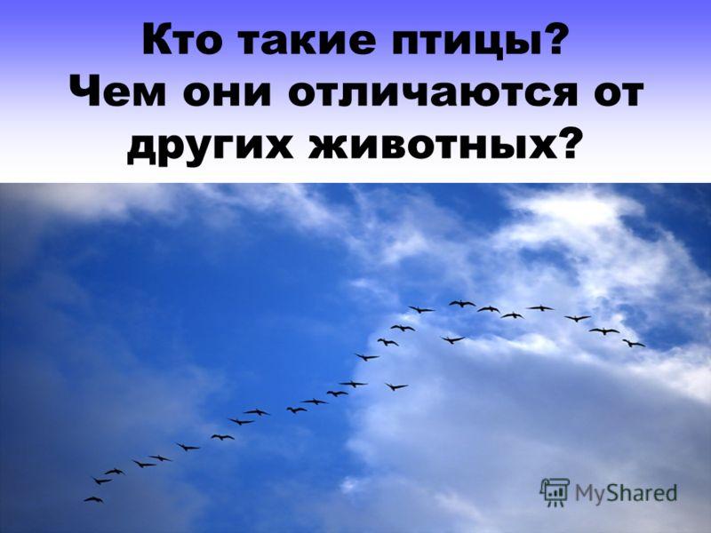 Кто такие птицы? Чем они отличаются от других животных?