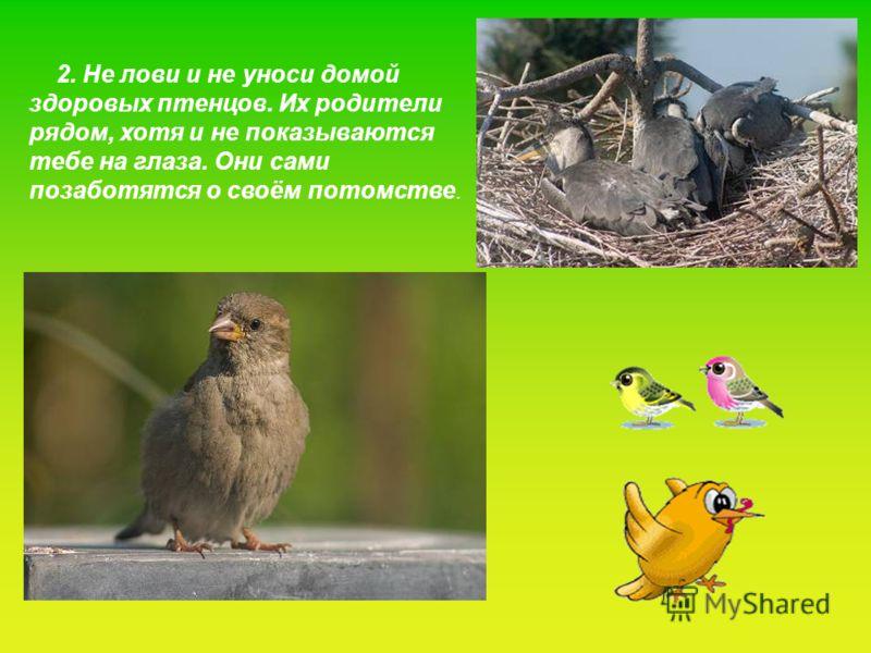 2. Не лови и не уноси домой здоровых птенцов. Их родители рядом, хотя и не показываются тебе на глаза. Они сами позаботятся о своём потомстве.