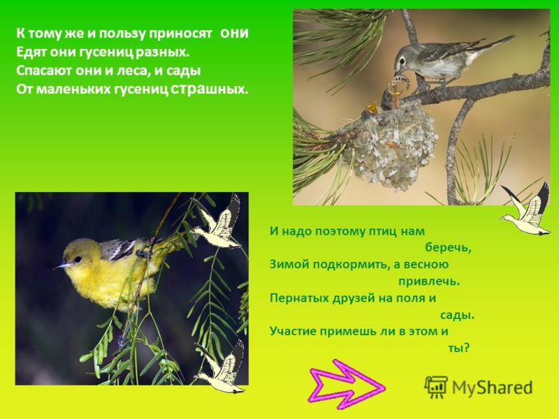 К тому же и пользу приносят они Едят они гусениц разных. Спасают они и леса, и сады От маленьких гусениц стра шных. И надо поэтому птиц нам беречь, Зимой подкормить, а весною привлечь. Пернатых друзей на поля и сады. Участие примешь ли в этом и ты?