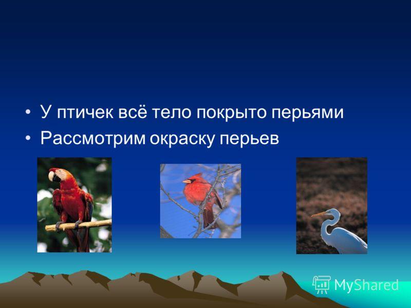По форме птичьего клюва можно определить, чем питается птица