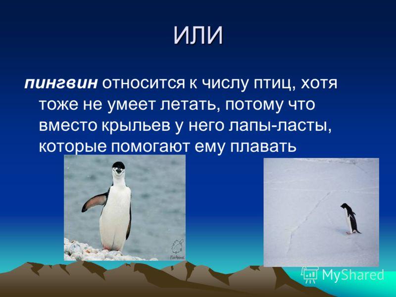 Например, африканский страус не умеет летать, и крылья ему служат для украшения Он имеет сильные ноги, на которых бегает так же быстро, как лошадь