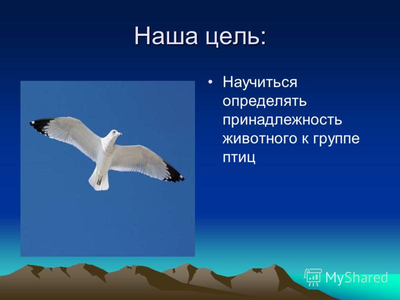 Кто такие птицы? Ученики 2 класса МБОУ «Никаноровская сош»