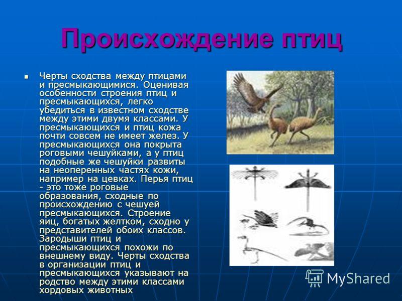 Происхождение птиц Черты сходства между птицами и пресмыкающимися. Оценивая особенности строения птиц и пресмыкающихся, легко убедиться в известном сходстве между этими двумя классами. У пресмыкающихся и птиц кожа почти совсем не имеет желез. У пресм
