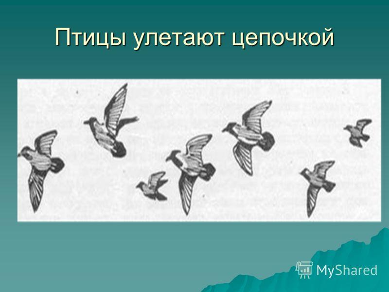 Птицы улетают цепочкой