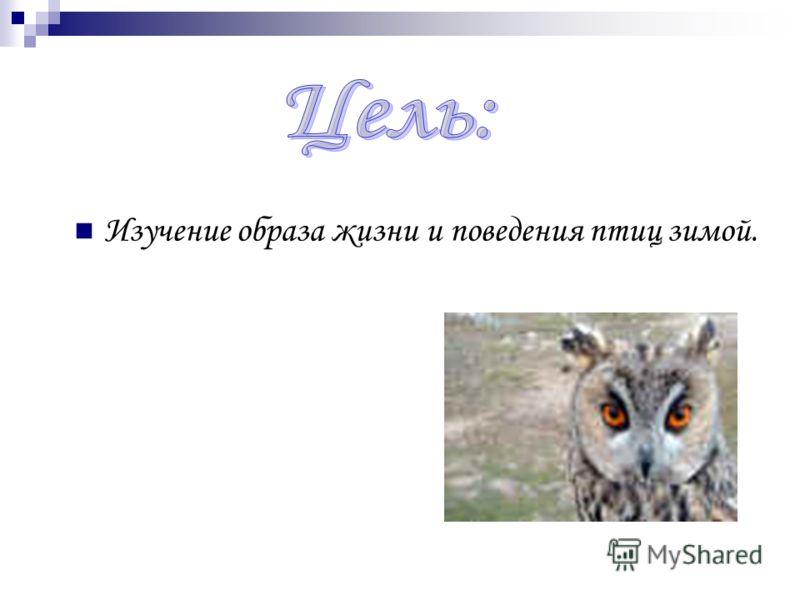 Изучение образа жизни и поведения птиц зимой.