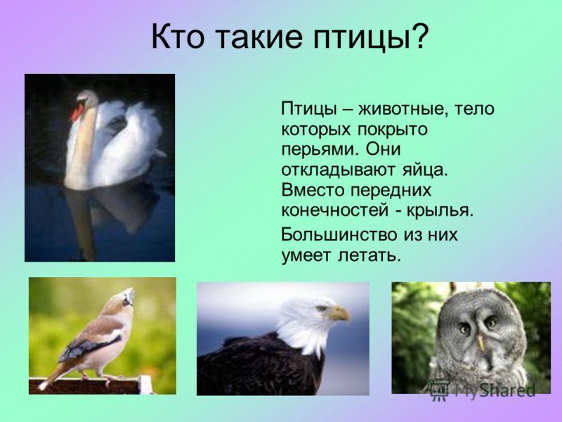 Кто такие птицы? Птицы – животные, тело которых покрыто перьями. Они откладывают яйца. Вместо передних конечностей - крылья. Большинство из них умеет летать.