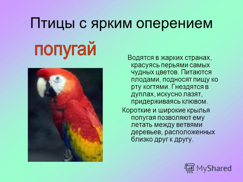 Птицы с ярким оперением Водятся в жарких странах, красуясь перьями самых чудных цветов. Питаются плодами, подносят пищу ко рту когтями. Гнездятся в дуплах, искусно лазят, придерживаясь клювом. Короткие и широкие крылья попугая позволяют ему летать ме