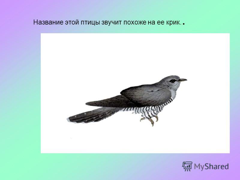 Название этой птицы звучит похоже на ее крик..