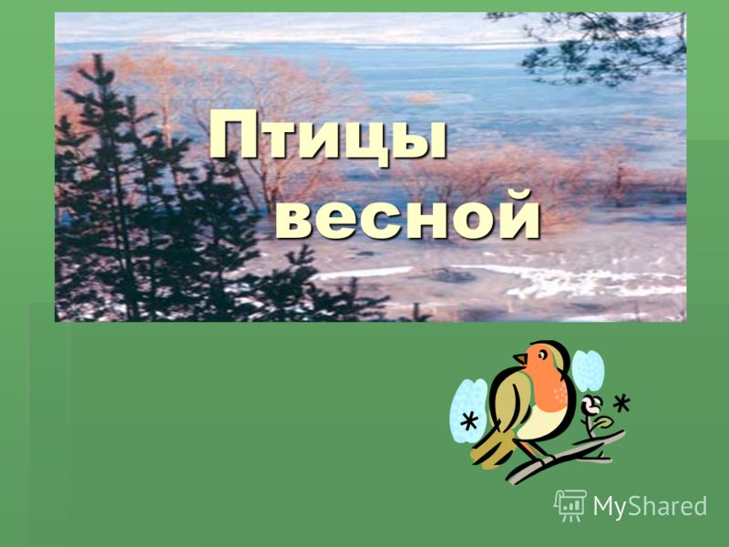 Птицы весной Птицы весной