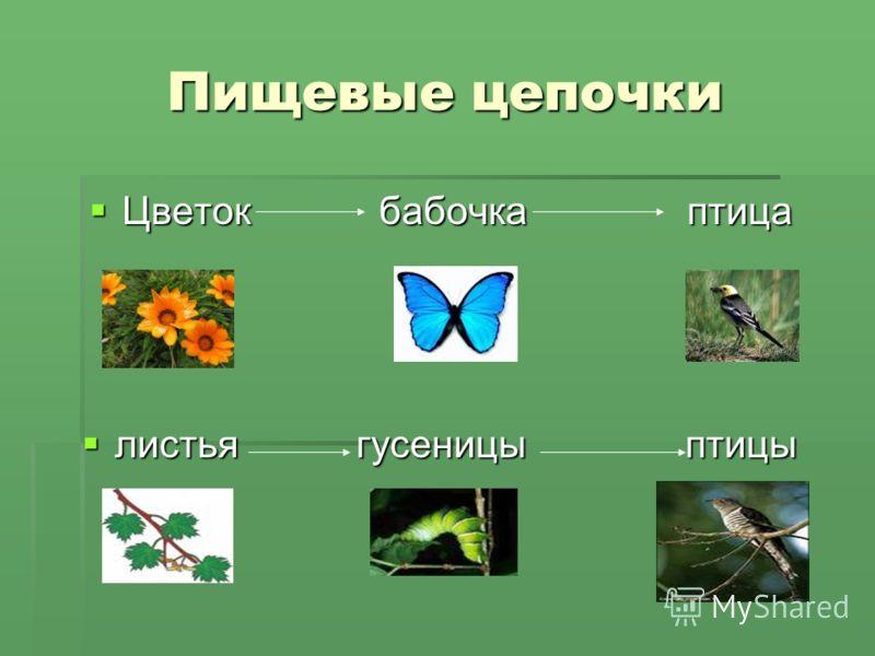 Пищевые цепочки Цветок бабочка птица Цветок бабочка птица листья гусеницы птицы листья гусеницы птицы