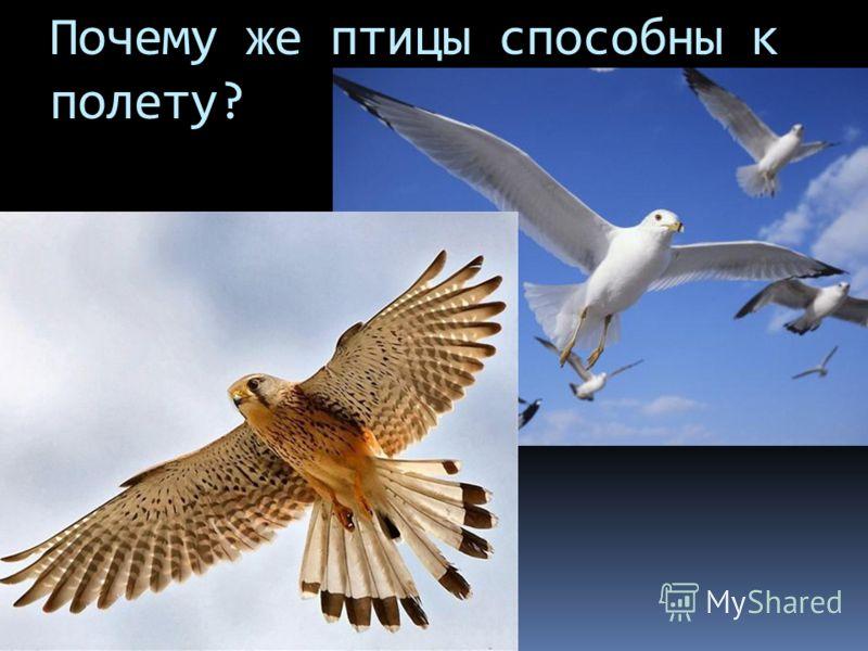 Почему же птицы способны к полету?