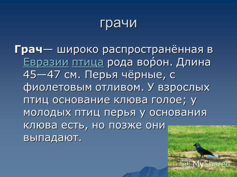грачи Грач широко распространённая в Евразии птица рода во́рон. Длина 4547 см. Перья чёрные, с фиолетовым отливом. У взрослых птиц основание клюва голое; у молодых птиц перья у основания клюва есть, но позже они выпадают. Евразииптица Евразииптица