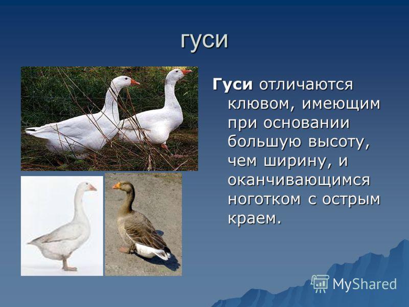 гдз 4 класс сравнительное описание гуся и утки