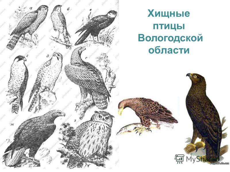 Хищные птицы Вологодской области