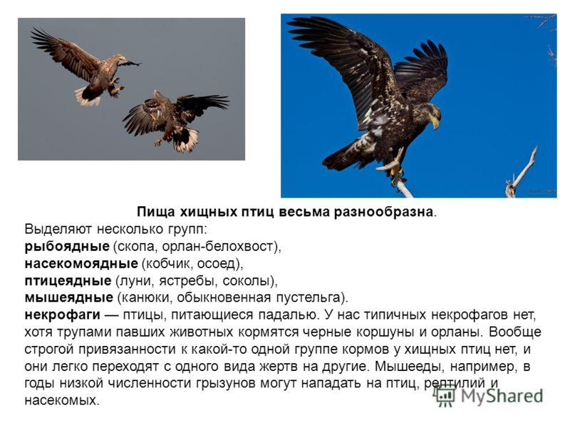 Пища хищных птиц весьма разнообразна. Выделяют несколько групп: рыбоядные (скопа, орлан-белохвост), насекомоядные (кобчик, осоед), птицеядные (луни, ястребы, соколы), мышеядные (канюки, обыкновенная пустельга). некрофаги птицы, питающиеся падалью. У