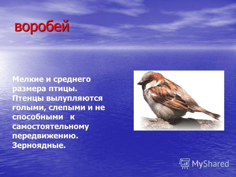воробей Мелкие и среднего размера птицы. Птенцы вылупляются голыми, слепыми и не способными к самостоятельному передвижению. Зерноядные.