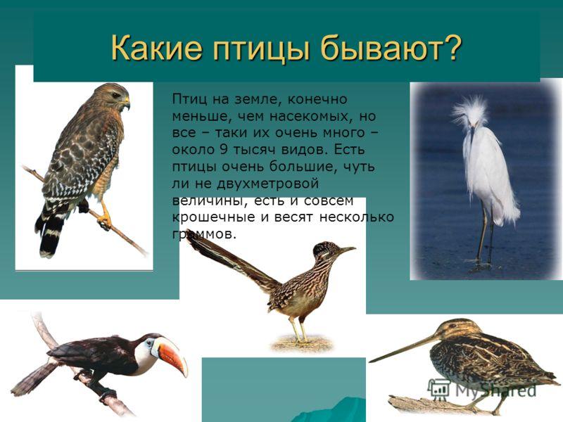 Цель урока: Расширять знания о птицах. Расширять знания о птицах. Закреплять знания о птицах зимующих в наших краях и перелетных. Закреплять знания о птицах зимующих в наших краях и перелетных. Воспитывать заботливое отношение к птицам. Воспитывать з