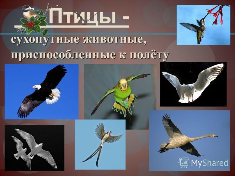 1. Птицы - сухопутные животные, приспособленные к полёту