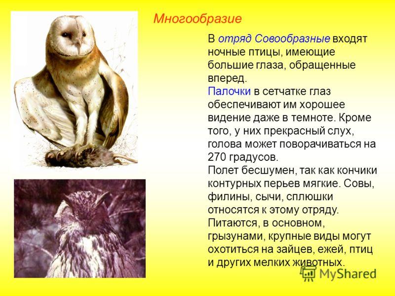 Многообразие В отряд Совообразные входят ночные птицы, имеющие большие глаза, обращенные вперед. Палочки в сетчатке глаз обеспечивают им хорошее видение даже в темноте. Кроме того, у них прекрасный слух, голова может поворачиваться на 270 градусов. П