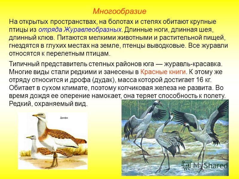 Многообразие На открытых пространствах, на болотах и степях обитают крупные птицы из отряда Журавлеобразных. Длинные ноги, длинная шея, длинный клюв.