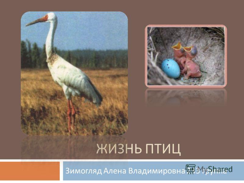 ЖИЗНЬ ПТИЦ Зимогляд Алена Владимировна 233 группа